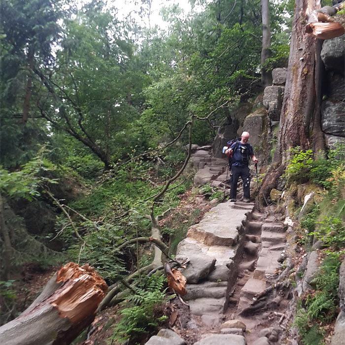 Urtümlicher Weg . Malerweg Sächsische Schweiz 2018 (Foto: Klaus Rennert)