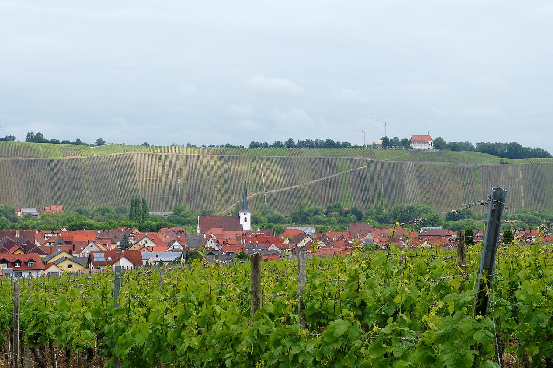 Weinberg bei Nordheim . Weinwanderung Volkacher Mainschleife 2018 (Foto: Sigrid Beck)