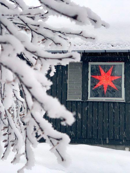 Weihnachtsstern . Beitostölen 2019 (Foto: Manuela Hahnebach)